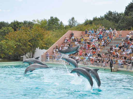 Image dauphins p