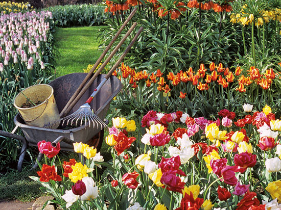 Image jardins p