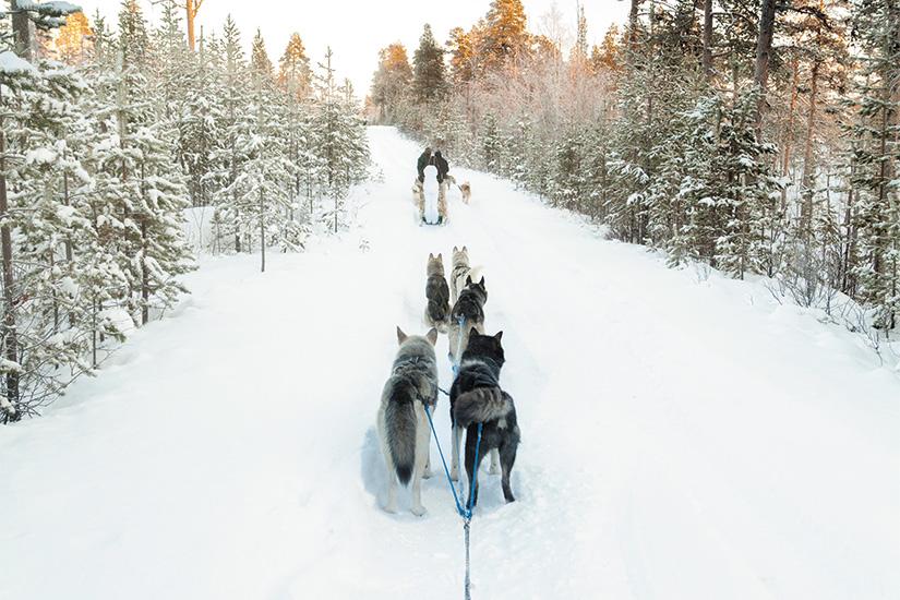 image 1 Touristes tenant un traineau a chiens en Laponie 22 it 178524672