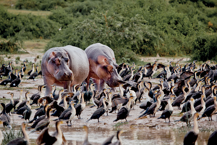 image 1 cote ivoire lac hippopotame 02 as_78658187