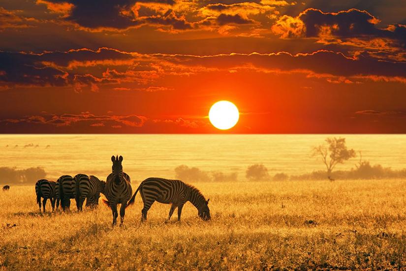 image Afrique du Sud Parc Kruger
