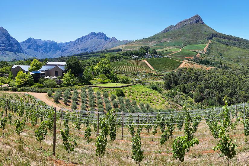 image Afrique du sud Delaire Graff vignoble  fo