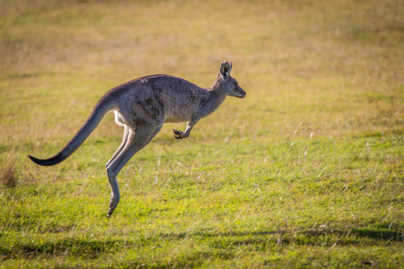 Australie - Circuit Le Pays Continent du Bout du Monde