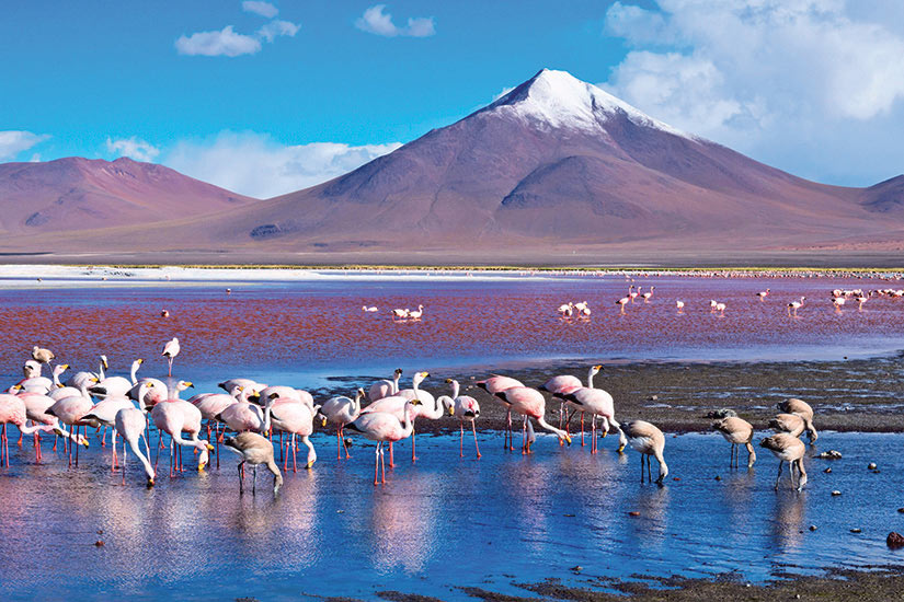 image Bolivie Atacama flamants roses  it