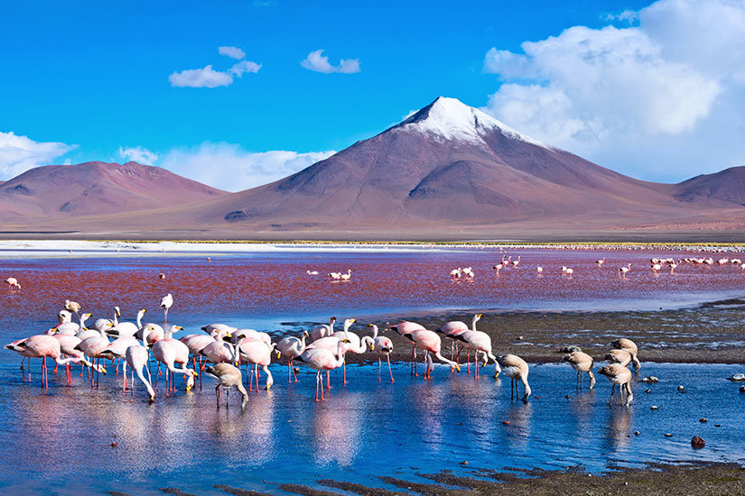 image Bolivie Lac Laguna Colorada Flamants roses  it