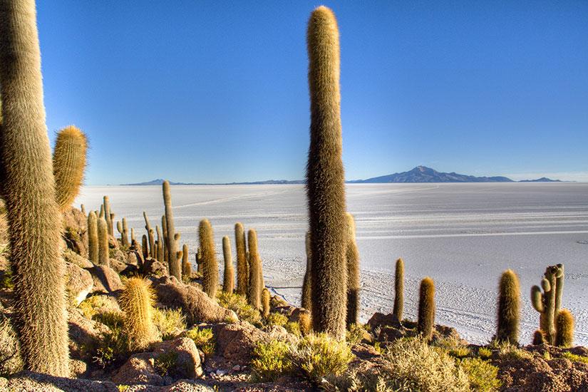 image Bolivie Uyuni Cactuses marais salants  fo