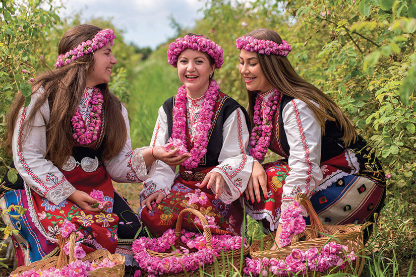 image Bulgarie Filles cueillette roses  fo