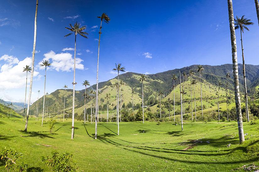 image Colombie Salento vallee Cocora palmiers  fo