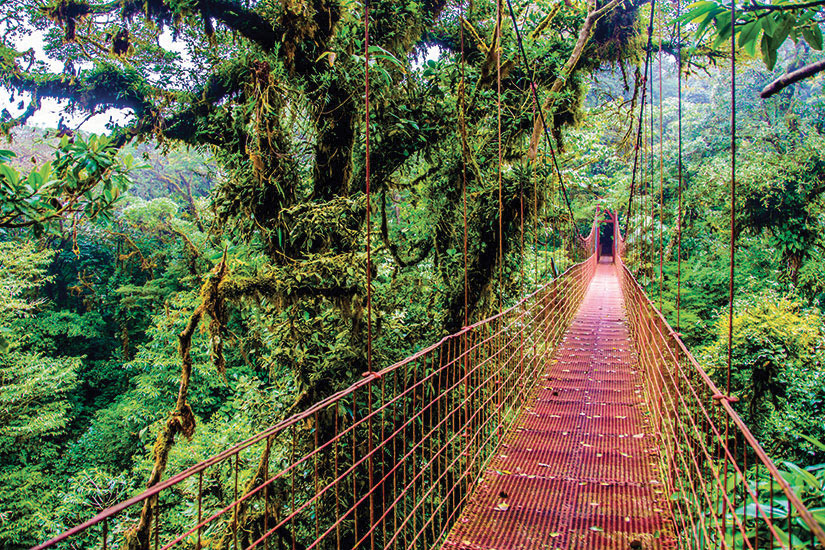image Costa Rica Pont en foret tropicale  fo