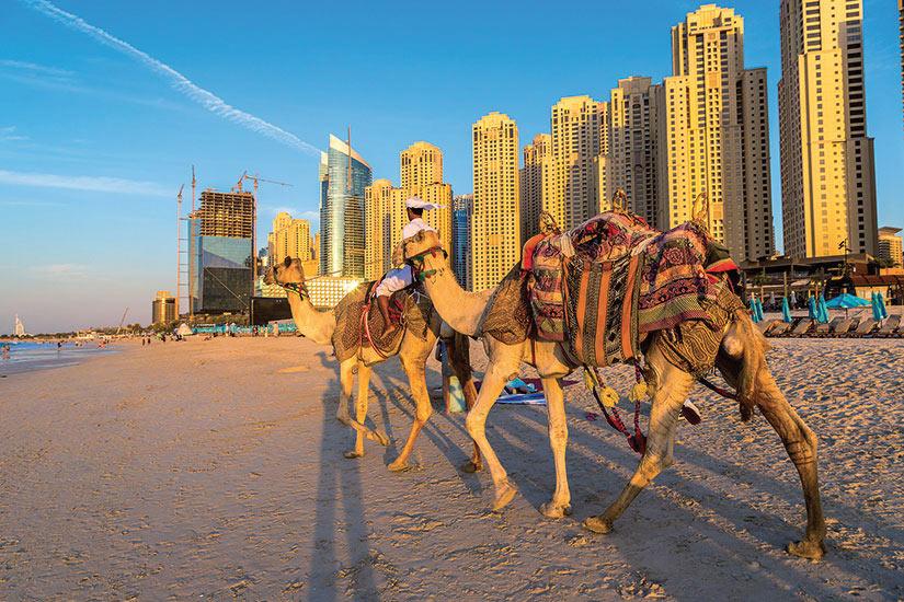 image Emirats Arabes Unis Dubai camel en face de la marina de Dubai  fo