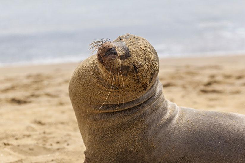 image Equateur Galapagos lion de mer  it