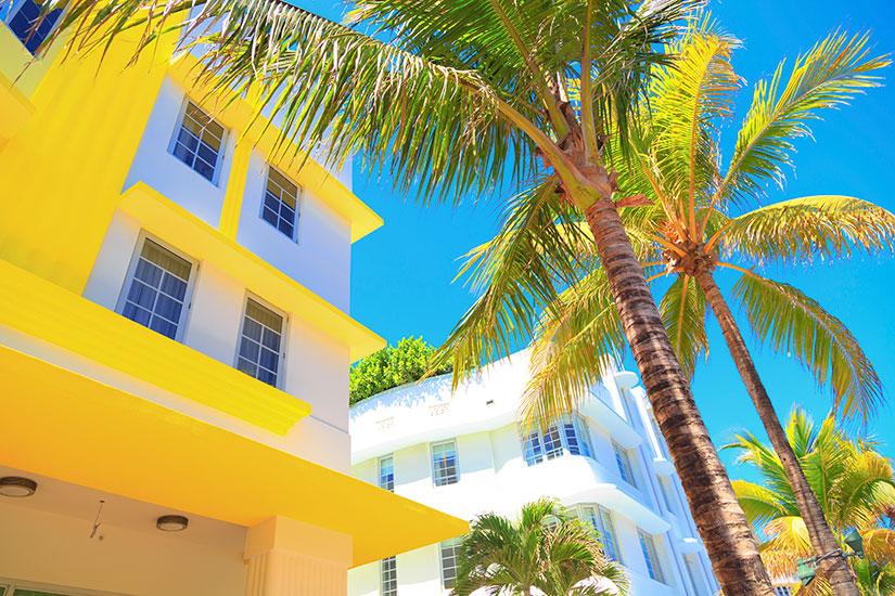 image Etats Unis Miami batiment palmier  it