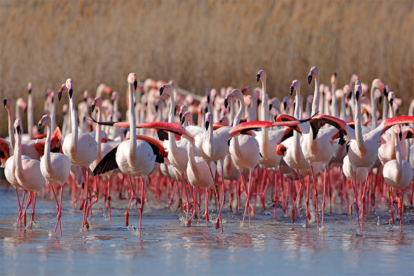 image France Camargue flamants roses 54 as_170827549
