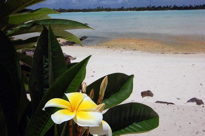 image France Tahiti tiare plage sable blanc  fo