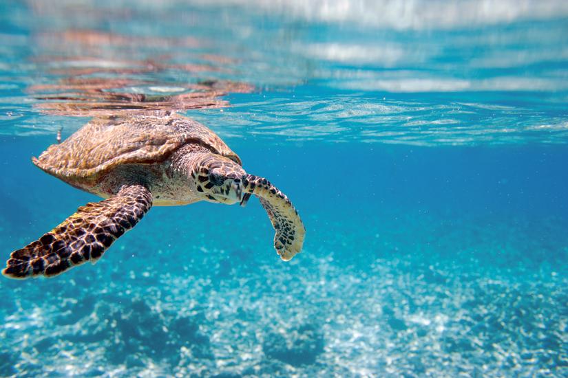 image Iles seychelles tortue mer 22 fo_29003645