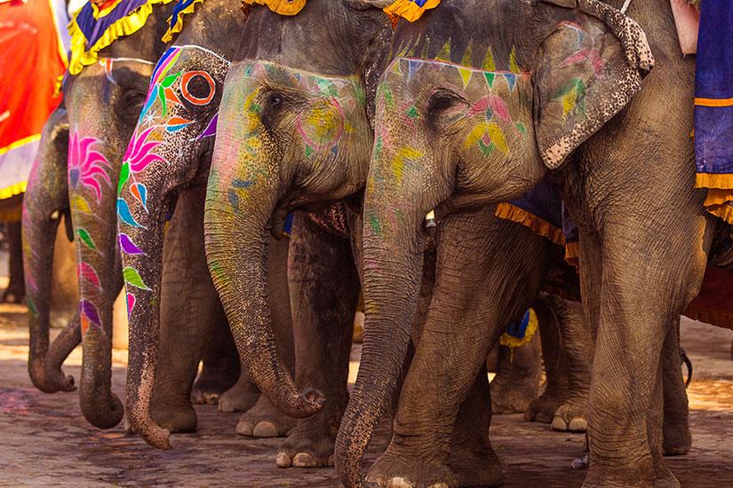 image Inde Deecorated groupe elephants  it