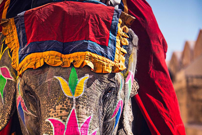image Inde Elephant beaute  it