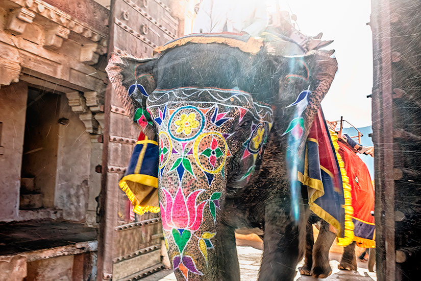 image Inde Jaipur Fort Amber elephant  it