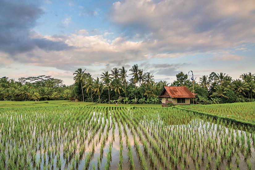 image Indonesie Bali champ de riz  fo