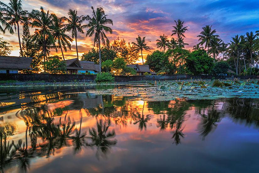 image Indonesie Bali palmiers  it