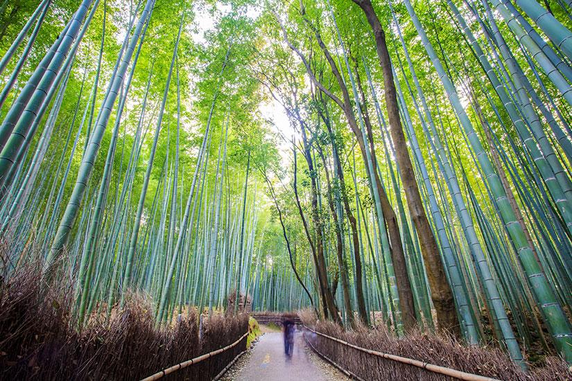 image Japon Kyoto  foret bambous  it