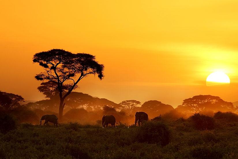 image Kenya ParcNational Amboseli elephant  it