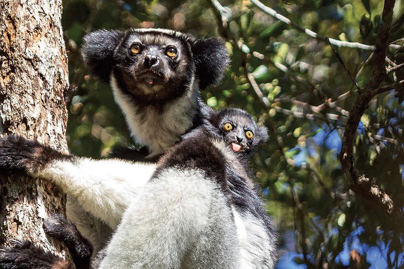 image Madagascar Andasibe Babakoto  it