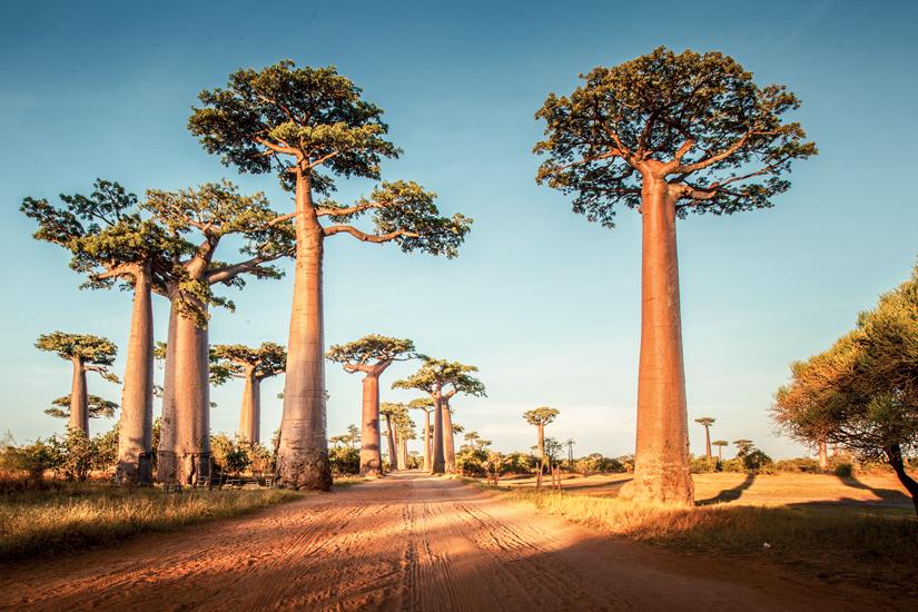 image Madagascar baobabs faune 01 fo_71593150
