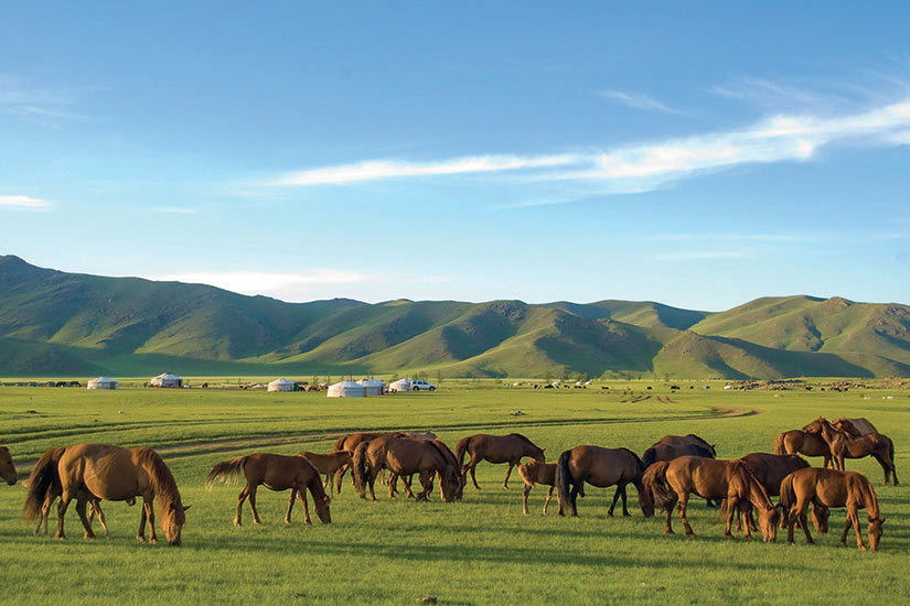image Mongolie Chevaux  it