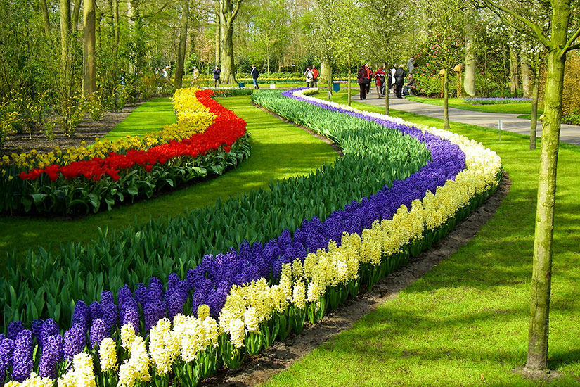 image Pays Bas Leiden Jardins Keukenhof  it