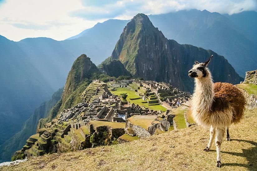 image Perou Machu Picchu Lama  it