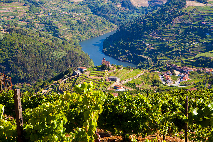 image Portugal Vallee Douro Vignoble  it