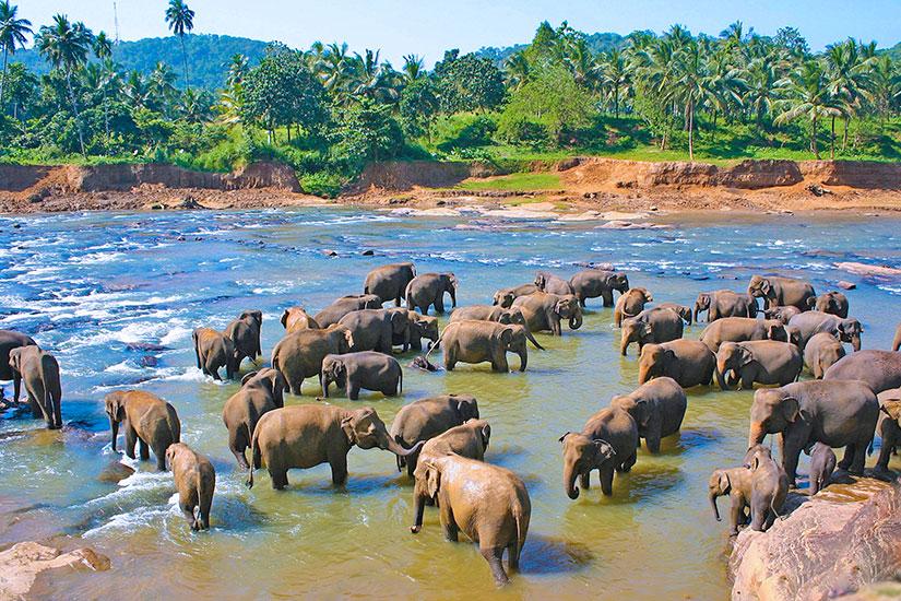 image Sri Lanka Elephants jeu  it