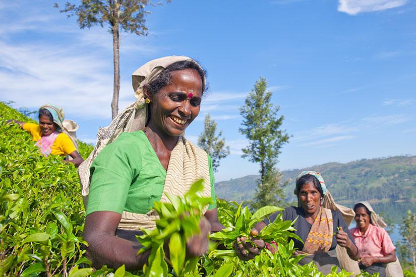 image Sri Lanka Femmes preparateur the  fo