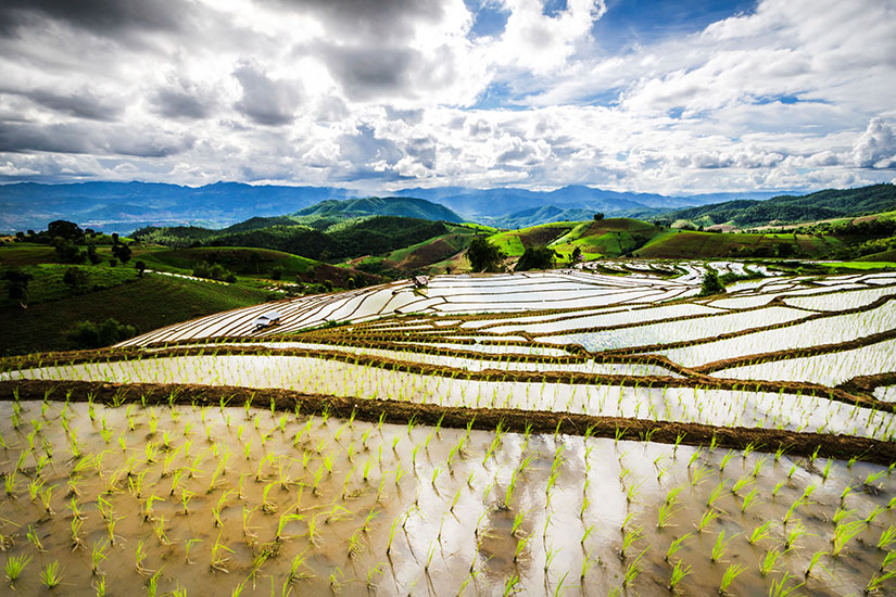 image Thailande Chiang Mai Champ riz terrasse  it