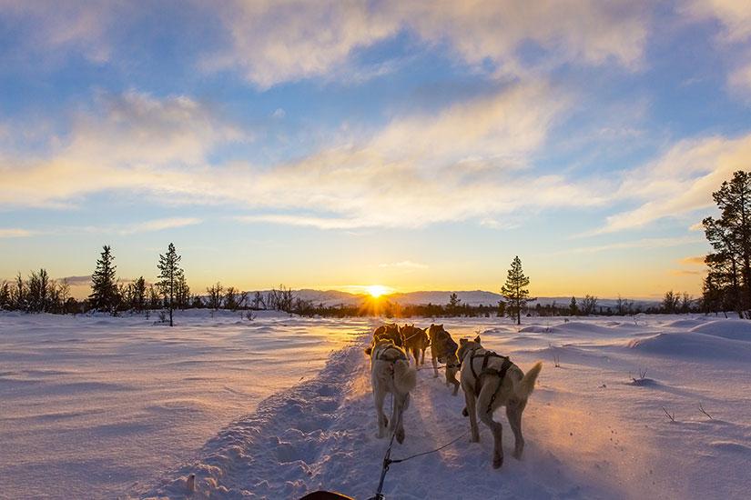 image Traineau chiens huskies  fo