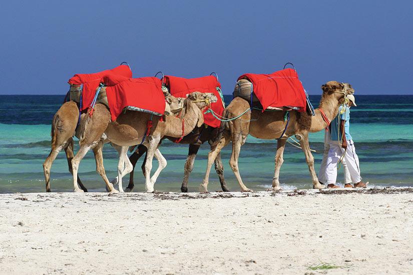 image Tunisie Djerba kamele  fo