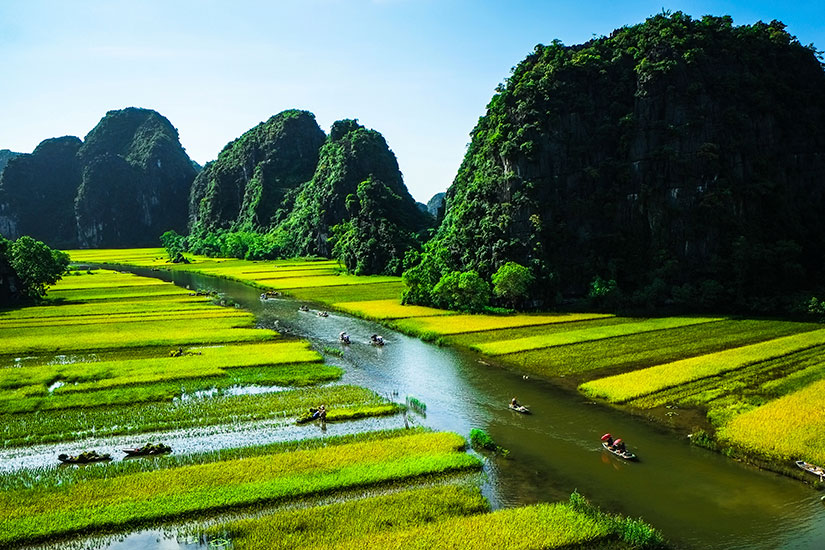 image Vietnam NinhBinh Champ riz  it