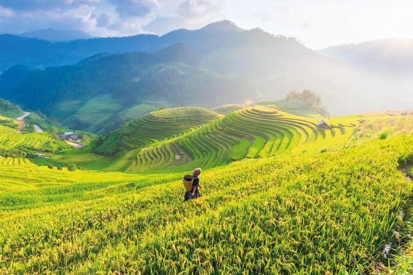 image Vietnam agriculteur champs riz terrasses 39 as_129802696