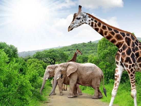 image afrique du sud park kruger