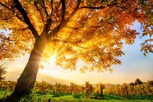 vignette Automne nature arbres soleil 21 as_120624776