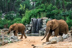 vignette France zoo de la fleche elephant