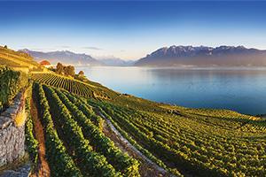 suisse vignoble au bord du lac leman as_389590371