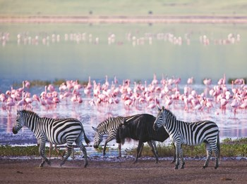 vignette Tanzanie lac manyara zebre