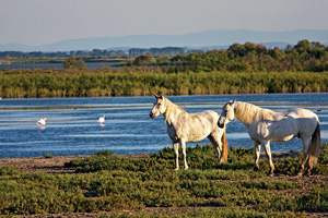 france camargue chevaux  it