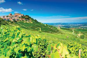 vignette italie vignobles barolo  it