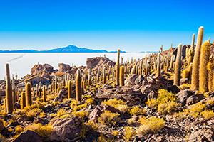 bolivie uyuni ile cactus  fo
