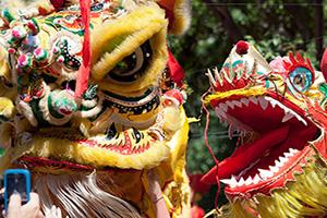 dragon celebration nouvel an chinois  it