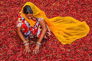 inde jodhpur femme tri poivrons rouge piment  it