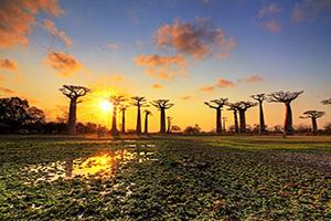 madagascar baobab paysage  it